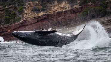 The excitement of whale watching!