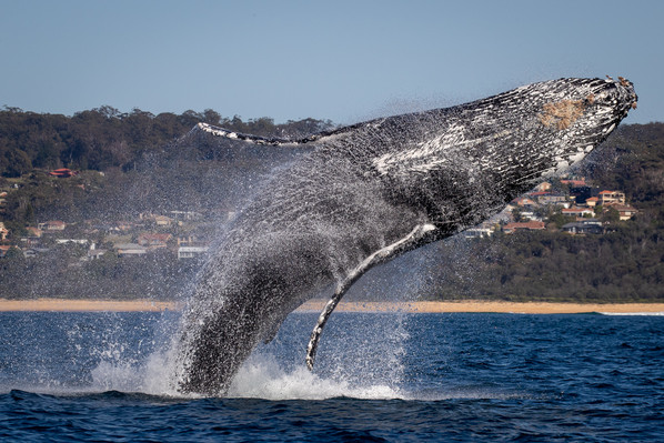 Whale Watching Air Time
