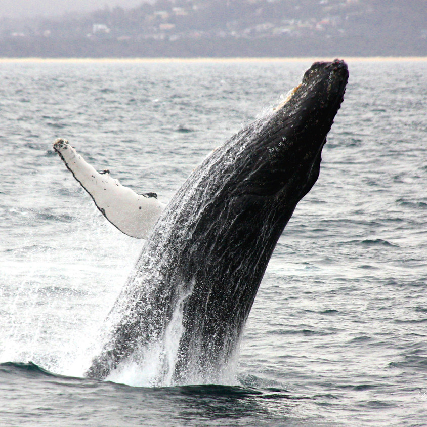 Eden Whale Festival