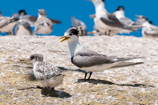 Plenty of bird life!