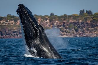 Whale watching fun