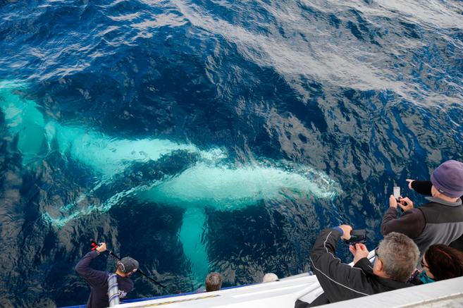 Whale watching Merimbula and Bermagui