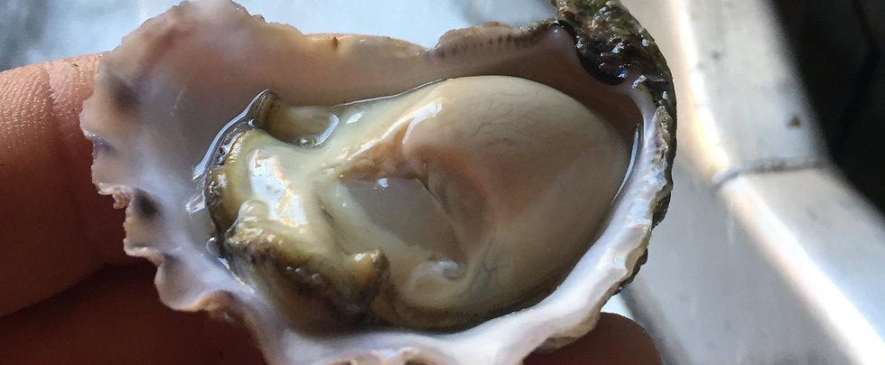 Merimbula Lake Oysters