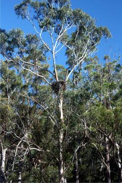 Sea Eagle Nest
