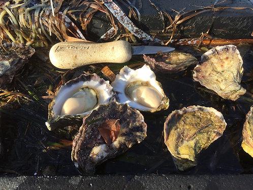 6 Dozen Unopened Oysters