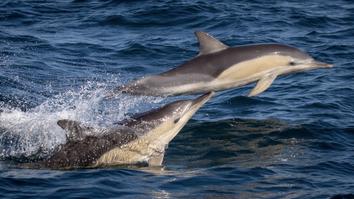 Dolphin magic!
