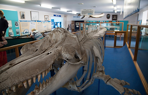 Whale Museum.png