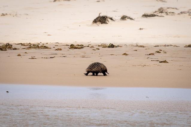 Little beach-goer