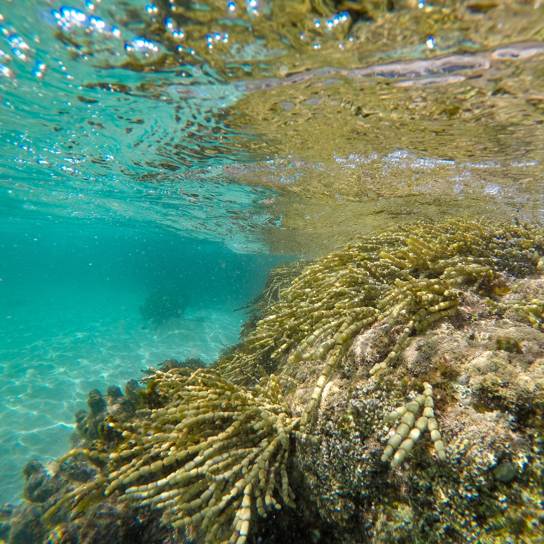 Snorkeling in clear waters