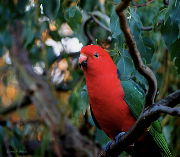 Gerry the King Parrot_edited.jpg