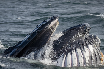 Up close to whales