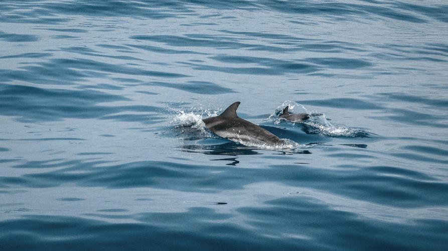 animal-wild-animals-aquatic-2203771_edit