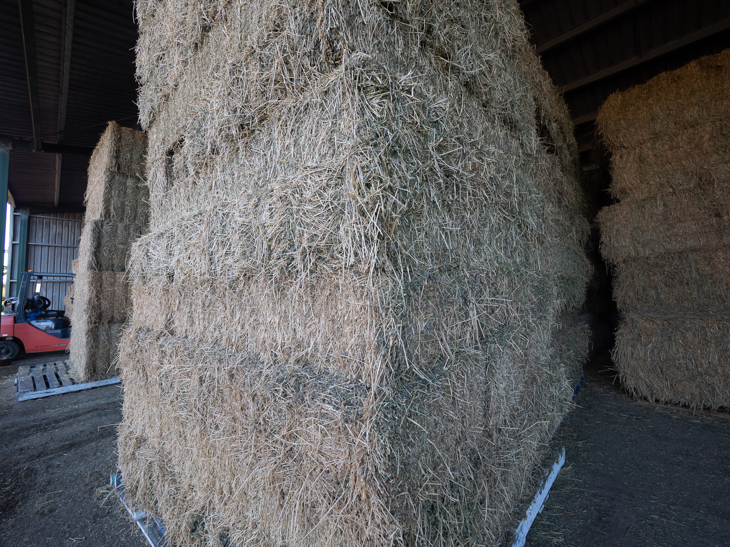 Hay & Grain - bulk available