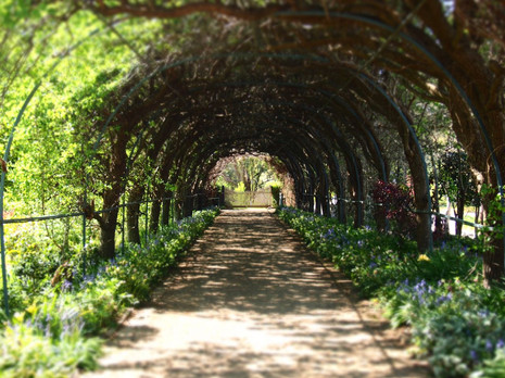 Foxgloves Spires Gardens