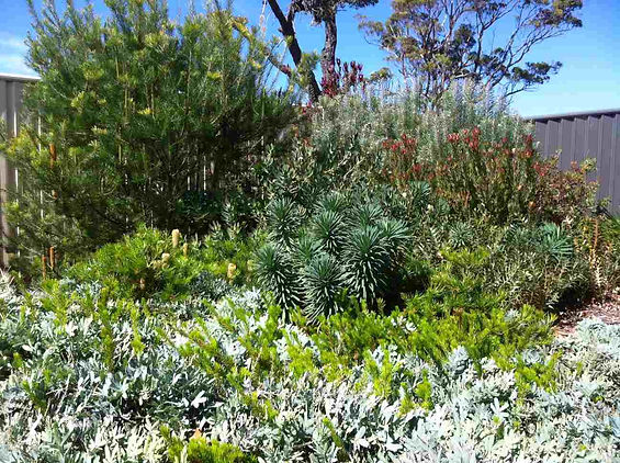drought+tolerant+gardens.JPG