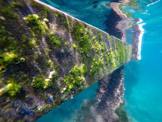 Underwater colour
