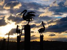 Pelican Sculptures