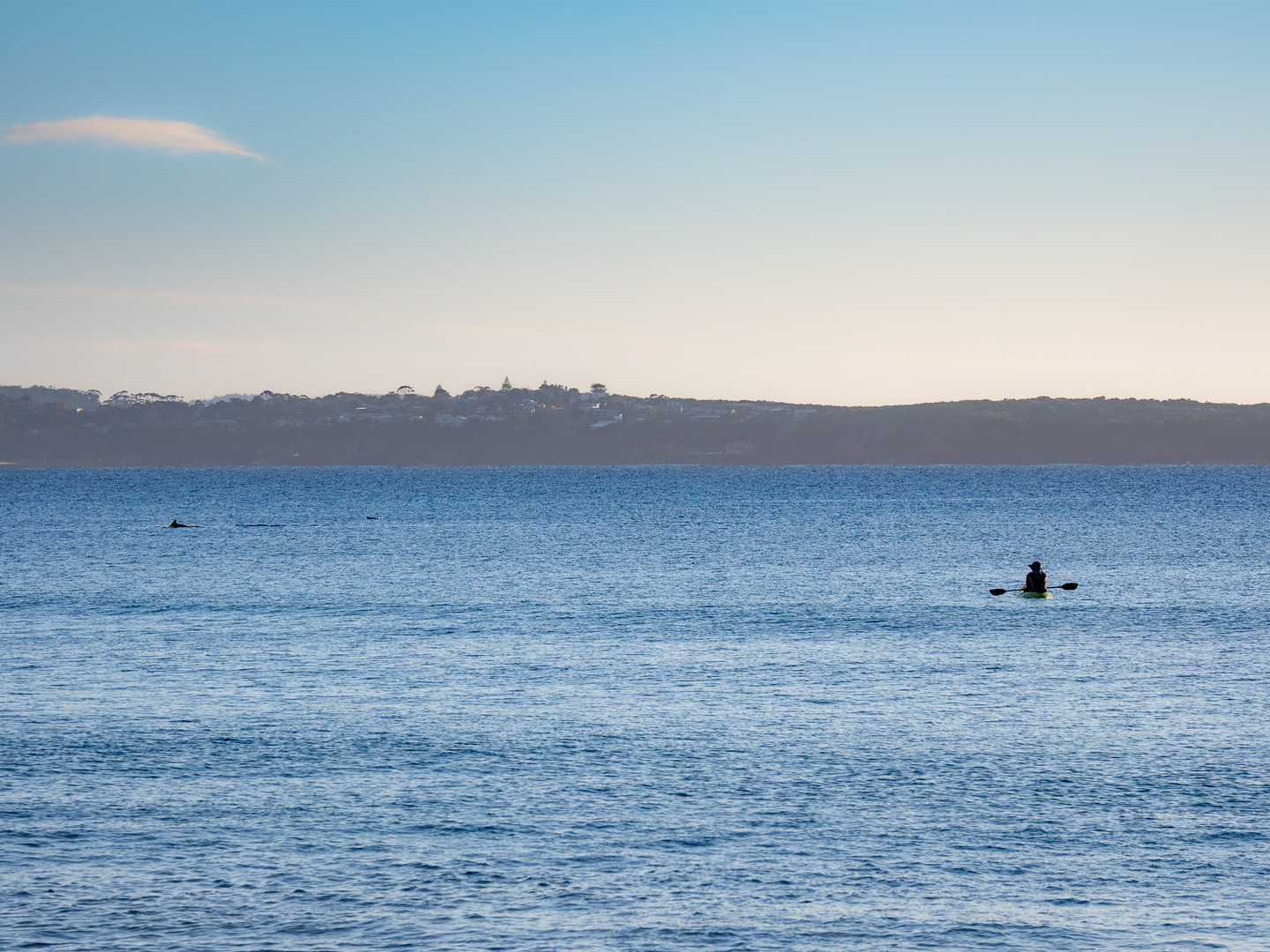 Dolphins at Lions Park Beach