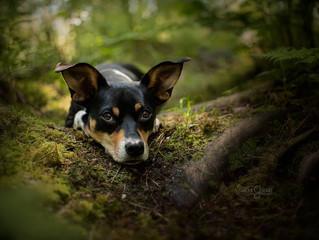 Hunde-Fotografie Workshop mit Anne Geier