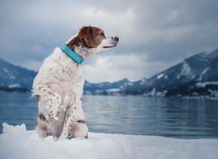 Fotoshooting im Winter Wonderland