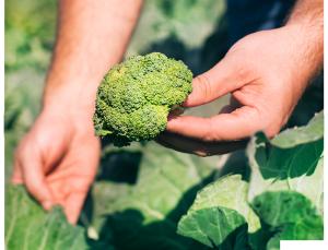 Plan for a Safe and Successful Edible Garden