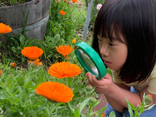 Back to School Garden-Based Learning Resources