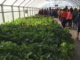 Study Links Gardening to Eating More Fruits and Vegetables