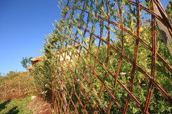 The living fence