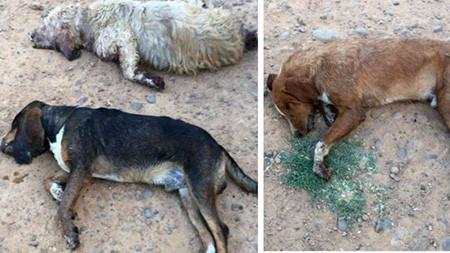 Perros de una reala asesinados por animalistas.