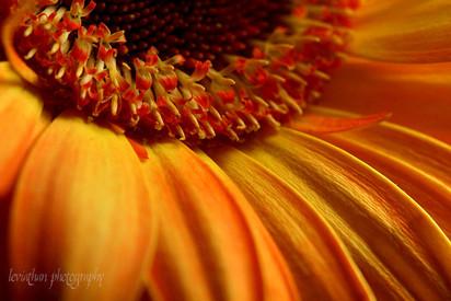 Flower's Sunset