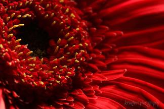Fire in a Flower