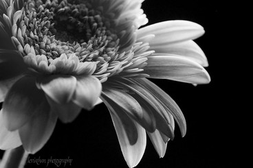Open to Black and White