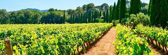 AOC Côtes de Provence.png