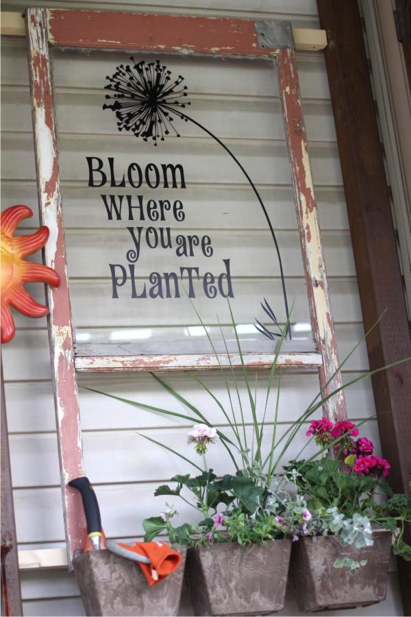 bloom planted cr.jpg