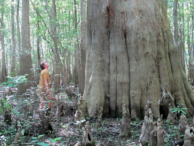 big cypress.png