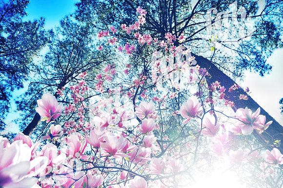"""Spring harmony"""