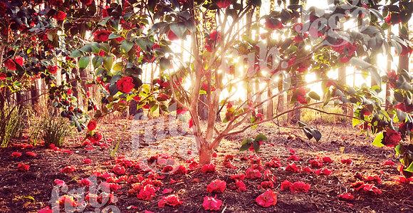 """Sunny flowers"""