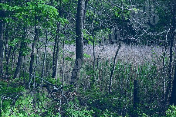 """Hampton forest"""