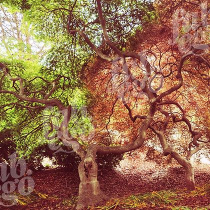 """""""Garden trees"""""""