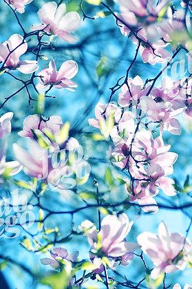 """""""Spring harmony, part III"""""""