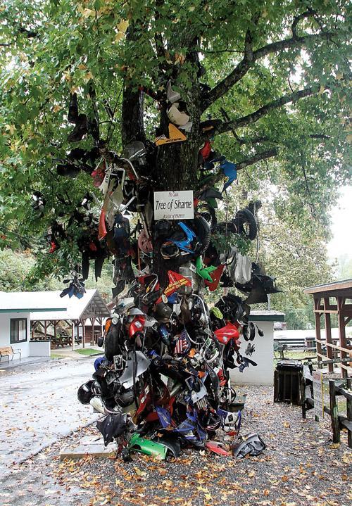"""""""Tree of Shame"""""""