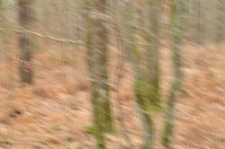 Forêt domaniale du Gâvre  3