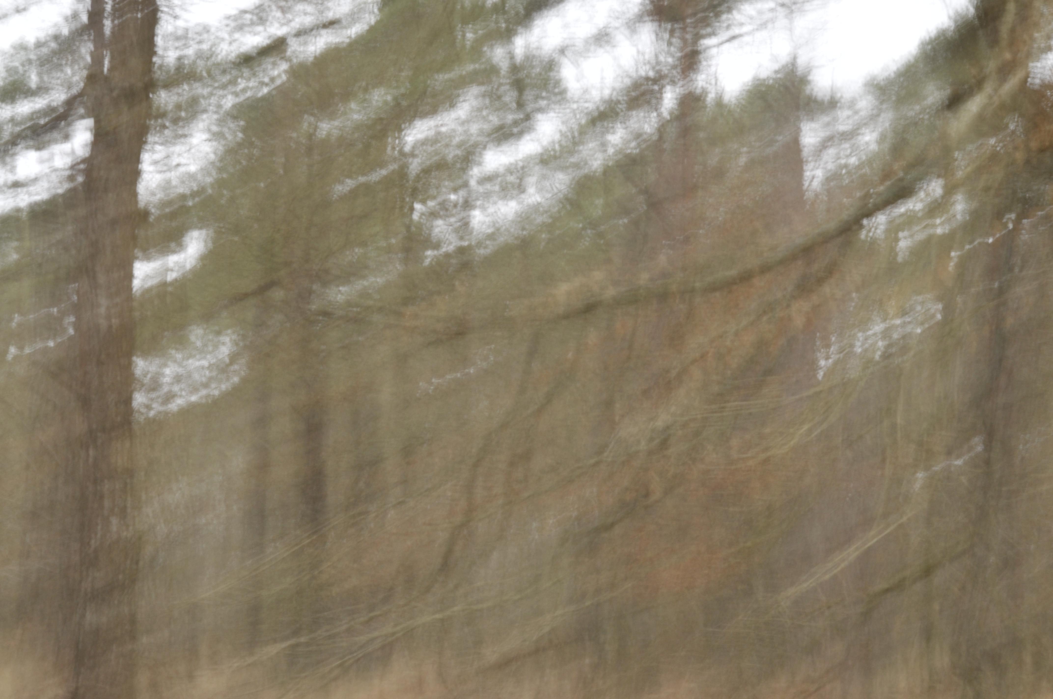 Forêt domaniale du Gâvre  2