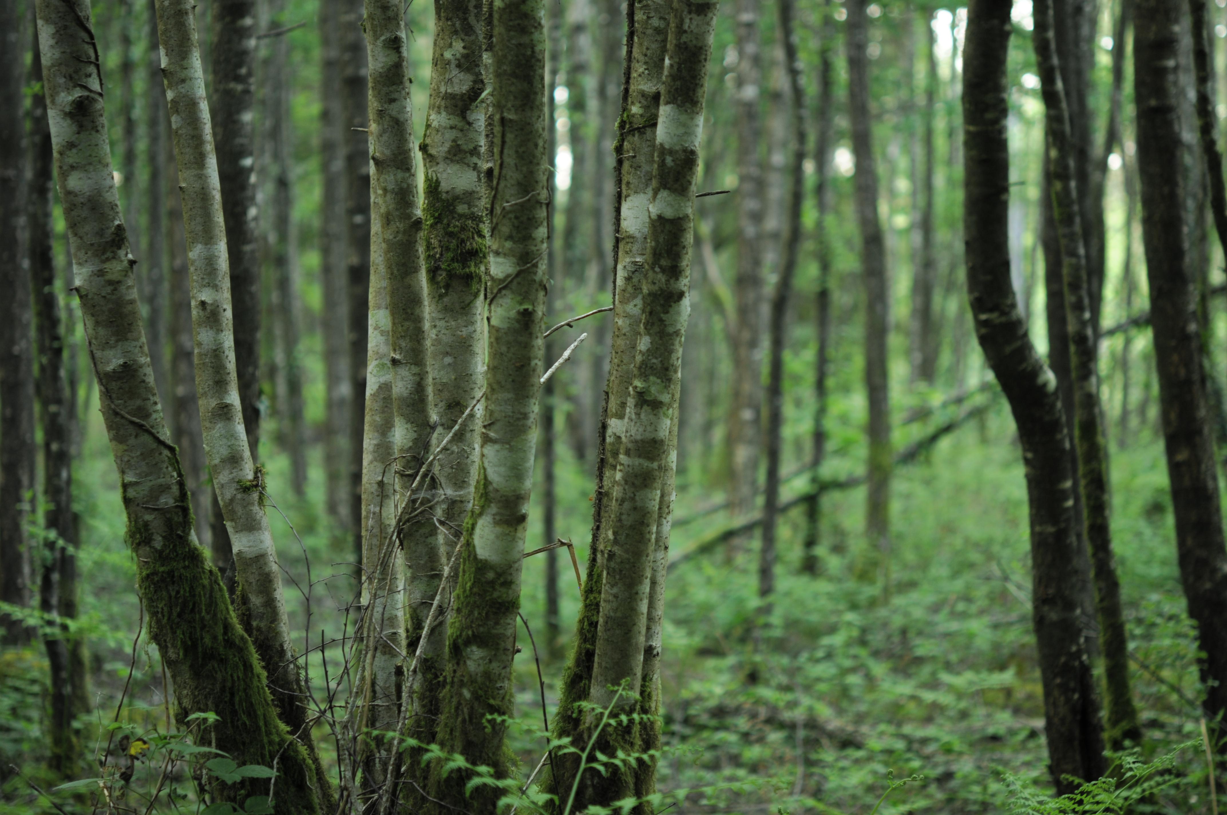 Bois de Caurel