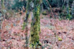Forêt domaniale du Gâvre