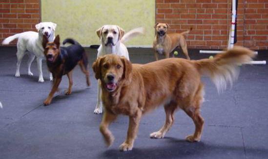 1/2 Day Doggy Daycare