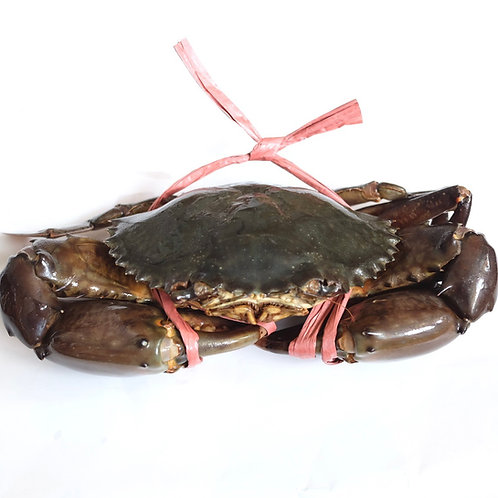 Mud Crab (per pc)