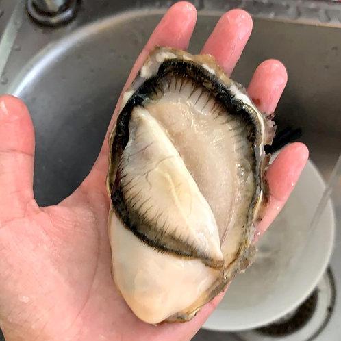 "Oysters 3"" (Fresh)"