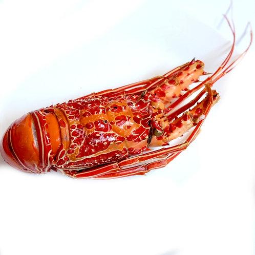 Spiny Lobster (per pc)