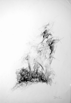 Alberi di roccolo 1988. Disegno a matita su carta 48x33